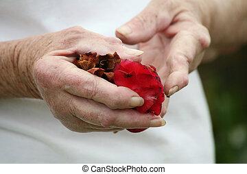 manos, tenencia, pétalos, artrítico, rosa