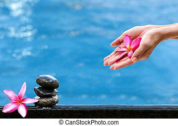 manos, tenencia, plumeria, flor, encima, agua, balneario, concepto