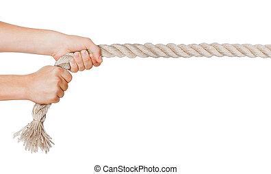 manos, tirón, un, rope., aislado, fondo blanco