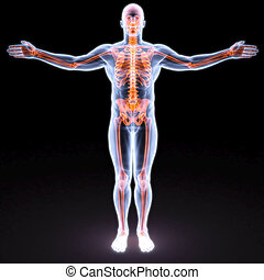 body - man's body under X-rays. bones are highlighted in...