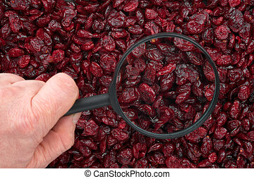 Man's hand holding a magnifying glass over the cranberries