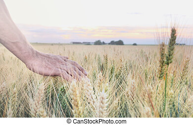 man's hand in field