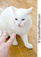 Man's hand trying to touch angry cat