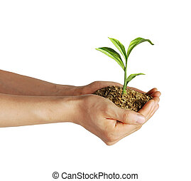 Man's hands holding soil with a little growing green plant....