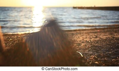 man's hands uses mobile smartphone near the sea at sunset beach. With blurred reflected In water background. Change focus