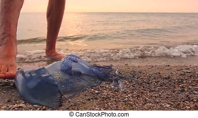 Man's legs are passing by dead, jellyfish in shallow sea water