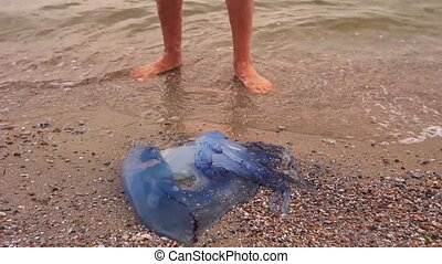 Man's legs are passing by dead, jellyfish in shallow sea water.
