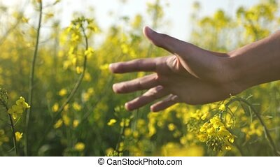 Man`s palm moving and touching the beautiful flowers of...