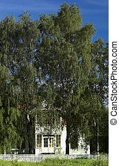 Mansion in Trees - An old white house, standing in a tree...
