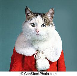 mantel, klädesplagg, claus, katt, jultomten, tom, kylig