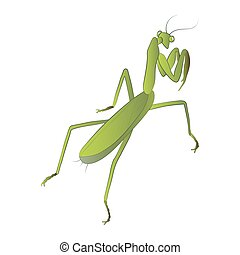 Mantis color illustration isolated on white background. Vector.