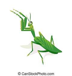 Mantis in an attacking pose