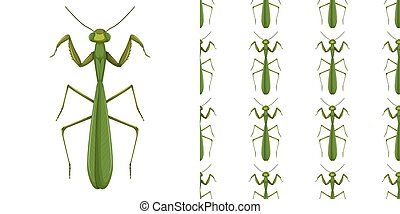 Mantis insect and seamless background illustration