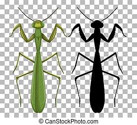 Mantis on transparent background illustration