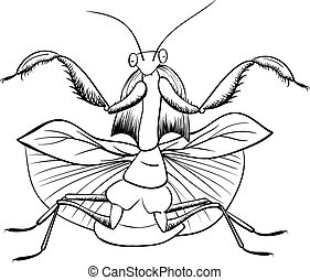 mantis vector insect, black line isolated on white