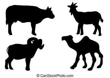 manual, adha, 4, vector, empate, animal, silueta, slaughted, idul, permitido, ser