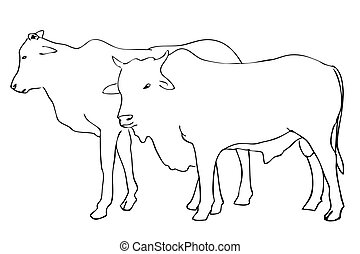 manual, adha, vaca, vector, empate, bosquejo, slaughted, idul, permitido, ser