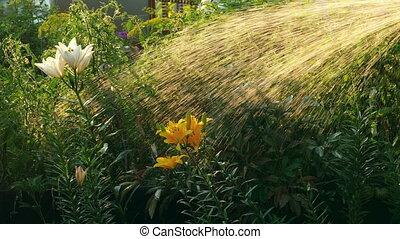 Manual garden sprayer