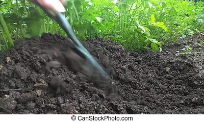 manual rake bed with parsley loosens and bores - manual rake...