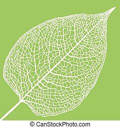 manually drawn leaf skeleton - Vector skeletonized leaf. The...