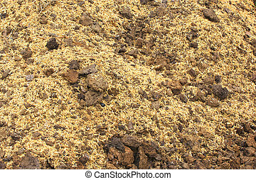 Manure on the ground. Animal excrement used to fertilize soils. Agriculture
