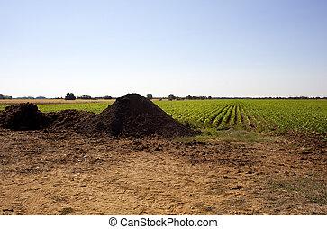 Manure on a field, Spain