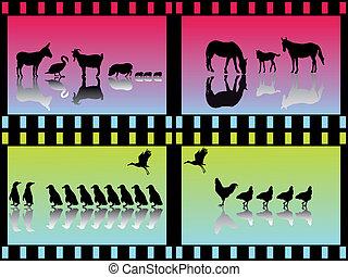 many animal groups
