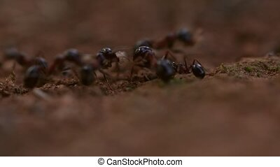 Many ants on the ground working hard macro footage