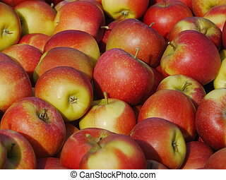 many apples in wooden boxes