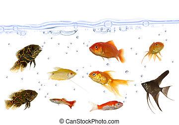 Many aquarium fish
