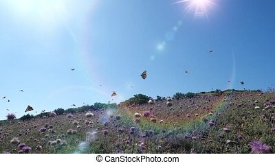 Many beautiful butterflies fly over lilac flowers and grass in the field against the background of the bright blinding sun in slow motion. Shot of butterflies flying over nature on a hot spring day.