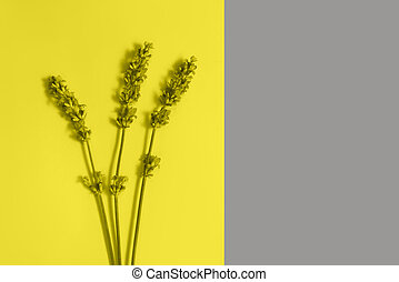 Many beautiful lavender flowers on the yellow and grey background.