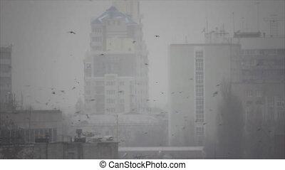 Many birds flight in frozen town morning