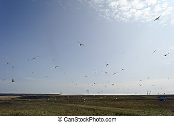 Many birds flying in the sky over a field