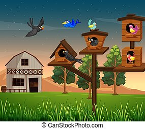 Many birds in birdhouse on the farm