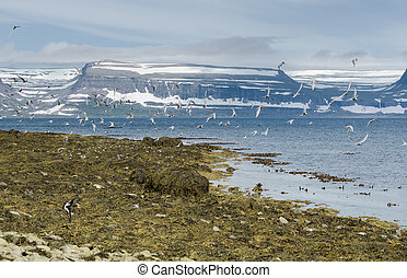 Many birds in flight, Vigour Island