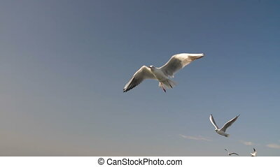 Many Birds in The Sky - Flying flock of seagulls in slow...
