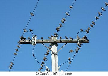 Birds on a telephone pole
