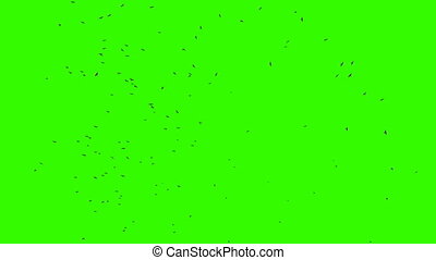Many Birds with chroma key - Flock of birds against green...