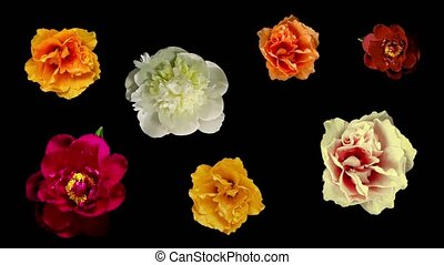 Many Blooming Flowers - Flowers blooming on balck background...