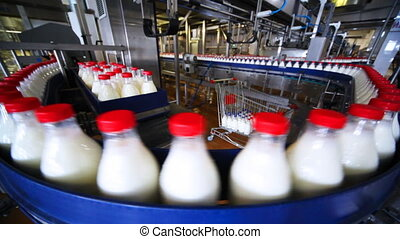 many bottles milk  move in row on conveyor at factory