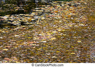 many bright yellow autumn leaves float on a water surface