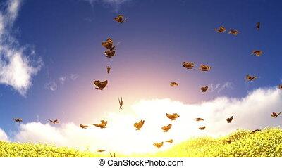 butterfly - many butterfly