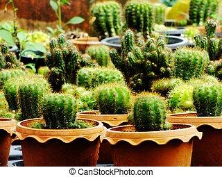 many cactus pots on wood shelf in garden