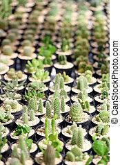 many cactus tree.
