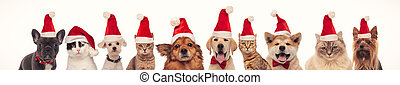many cats and dogs wearing santa claus hats for christmas