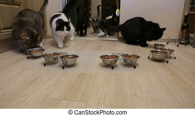 Many cats eating together