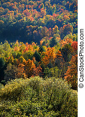 Many Colorful Trees - Scenic landscape in the middle of...
