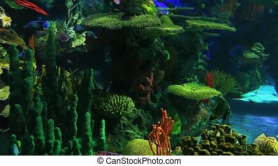 Colorful Tropical Fish swim in beautiful coral