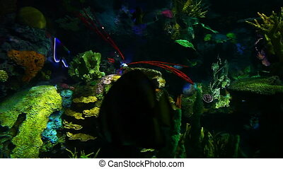 Many Colorful Tropical Fish swim